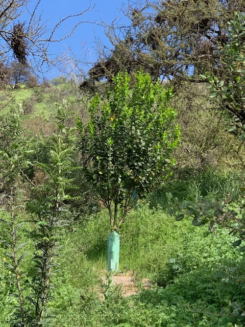 Más árboles para el cerro aledaño al colegio
